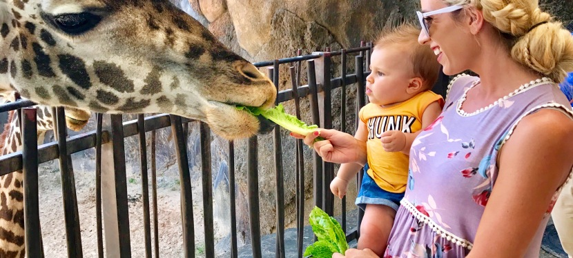 Jackson's First Zoo Experience